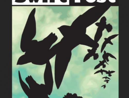 Swift Fest